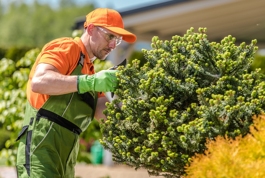 man trimming shrubs for landscaping