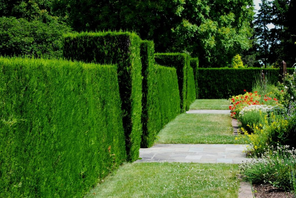 shrubs for living fences
